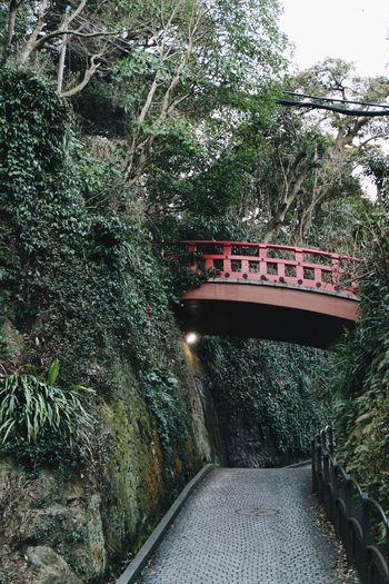 Vscocam Japan Enoshima Bridge - Man Made Structure Tree Connection Transportation Growth Nature River No People Day Plant Footbridge