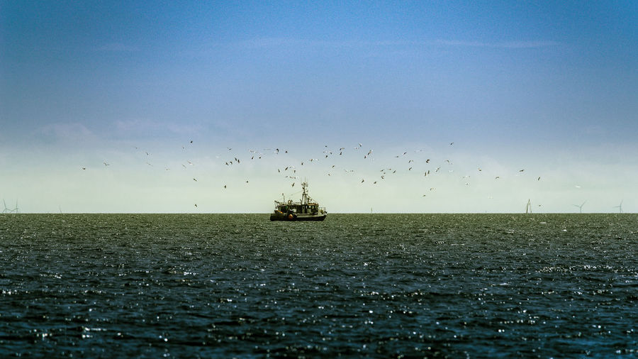 fishing boat Animal Themes Beauty In Nature Bird Blue Boat Calm Fishing Cutter Flying Horizon Over Water Nature Nautical Vessel Ocean Outdoors Sea Seascape Sky Tranquility Transportation Water Waterfront