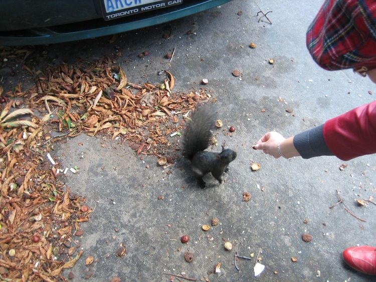 Squirrels in Canada are semi domestic animals; they meet people on their way to work and demand to share a content of lunch boxes. Casual Clothing City Squirrel Feeding Squirrel Low Section Personal Perspective Squirrel Street Photography Toronto Canada Travel Photography Traveling Unrecognizable Person Urban Animals Urban Life Urban Squirrel People And Places