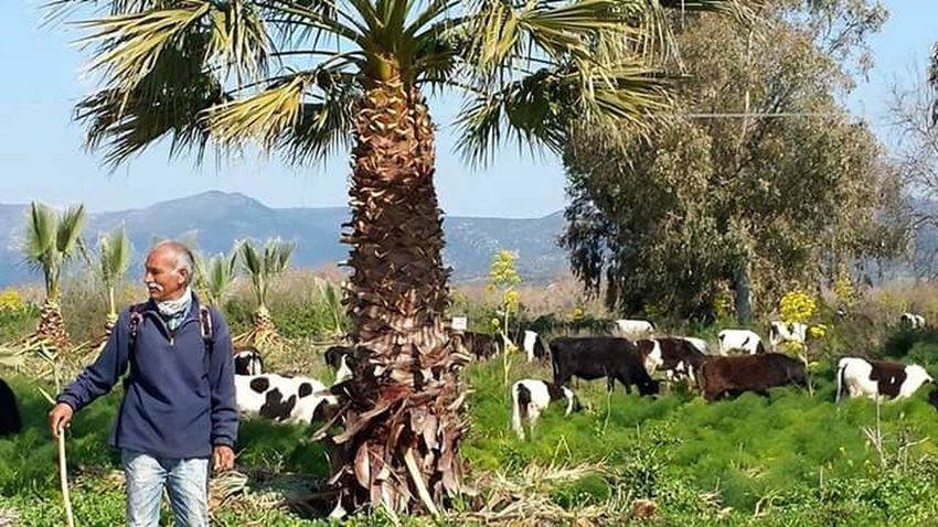 A farmer Farmer Farmer's Life Palm Tree One Person Cawboy Cows Cows In A Field Cows Of Eyeem Cows🐮 Trees And Sky Trees Trees And Nature Trees And Leaves Natural Beauty Nature Photography Nature_collection Naturelovers Natural Skyblue Mountains And Valleys Velly Beauty In Nature Outdoors Growth