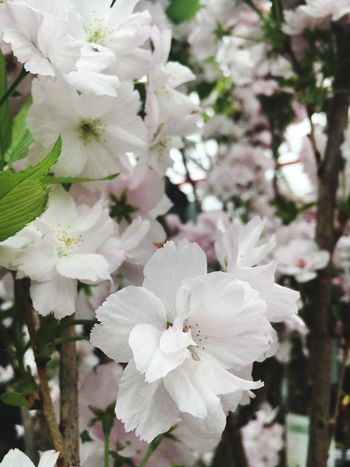 Flowers Flower Plant Flowering Plant Freshness Fragility Beauty In Nature Vulnerability  Close-up Focus On Foreground White Color