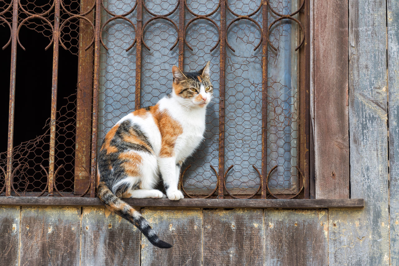 Tortoiseshell Cat Sitting On Window Sill