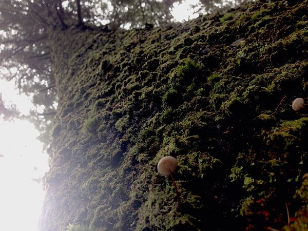 Looking up from the bottom in the Tongass National Rainforest! Tiny mushrooms! SitkaAlaska Nature