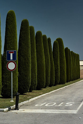 stop Blue Sky Cypress Day Dead End Green Color No People Outdoors Road Road Sign Row Of Trees Stop EyeEmNewHere Made In Italy