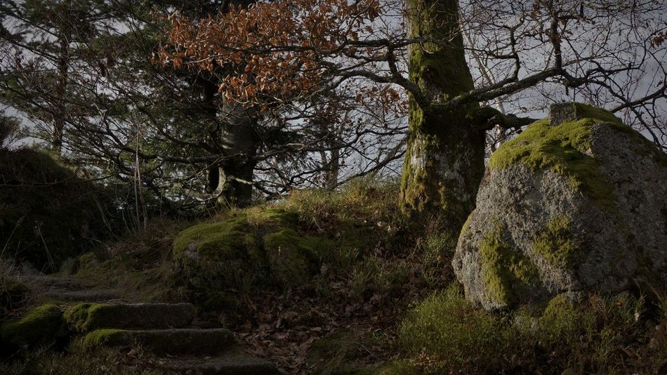 Autumn Beauty In Nature Black Forest Enchanted Forest Forest Moss Nature No People Outdoors Rocks Steps Tranquility Tree