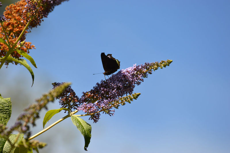 Low angle view of butterfly perching on flower