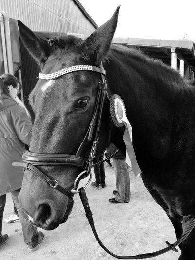 Winner Animal Themes Animal Domestic Mammal Domestic Animals Livestock Pets Animal Body Part Horse One Animal