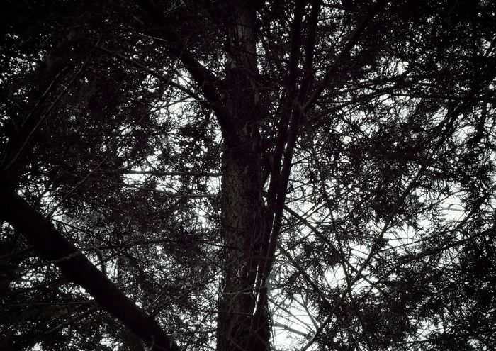 Tree Low Angle View Nature Growth Beauty In Nature Sky No People Tranquility Outdoors Branch Forest Day Scenics Dobble Exposure Leica Lens Huawai P9 P9 HuaweiP9 France🇫🇷 Huawei Dark Tree Vendée EyeEmNewHere