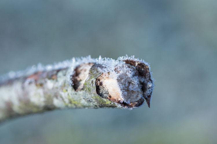 Close-up of frosty stick