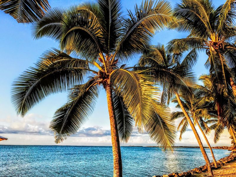 Palm Tree Sea Beauty In Nature Scenics Horizon Over Water Sky Beach Nature Outdoors Water No People Tranquil Scene Tranquility Tree Day Cloud - Sky