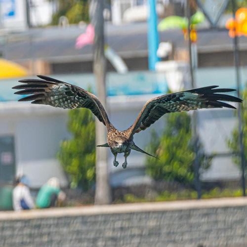 Bird flying over blurred background