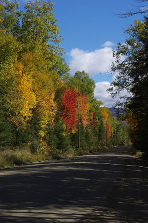 Autumn Glory Beauty In Nature Change Changing Seasons Colors Day Fall Beauty Multi Colored Nature Non-urban Scene Outdoors Road Scenics Sky The Road Less Travelled Tree Vibrant Colors The Great Outdoors - 2017 EyeEm Awards