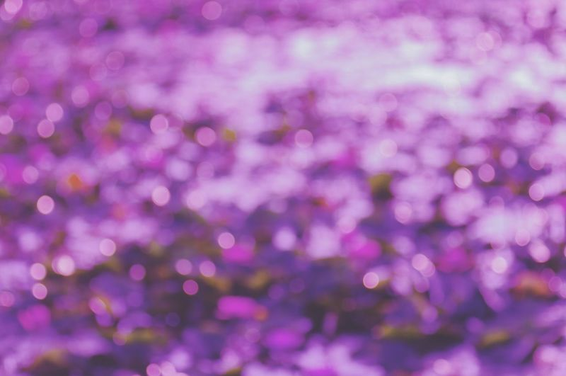 Ultra violet bokeh from out fo focus many lotus while take picture. The light of bokeh from Refraction on surface Background Bokeh Backgrounds Background Blur Backgrounds Ultra Violet Ultra Violet Light Beauty In Nature Outdoors Day Nature Close-up Freshness
