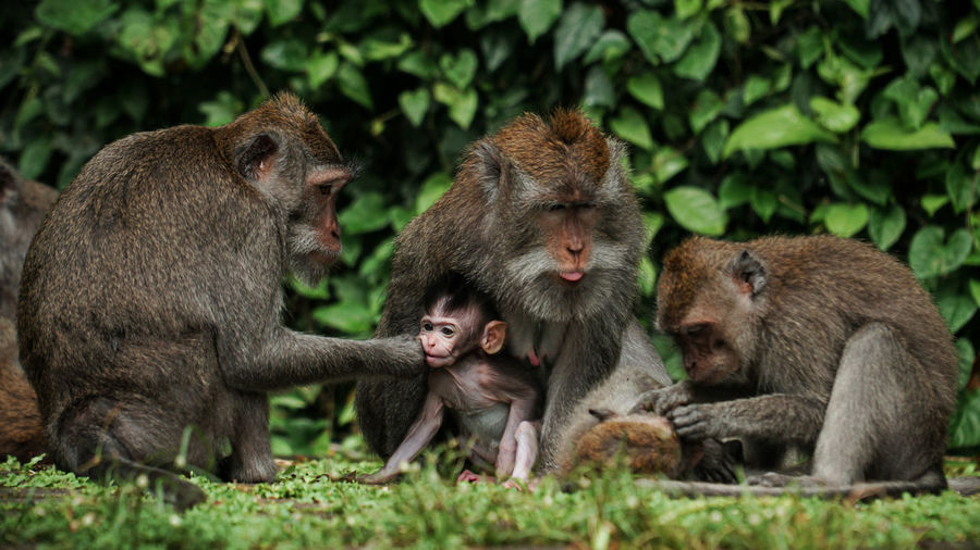 Group of monkey with baby monkey in the middle of a forest