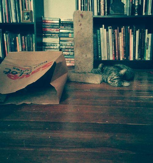Cats Catnip Play Animals