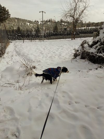 Dog on snow covered field