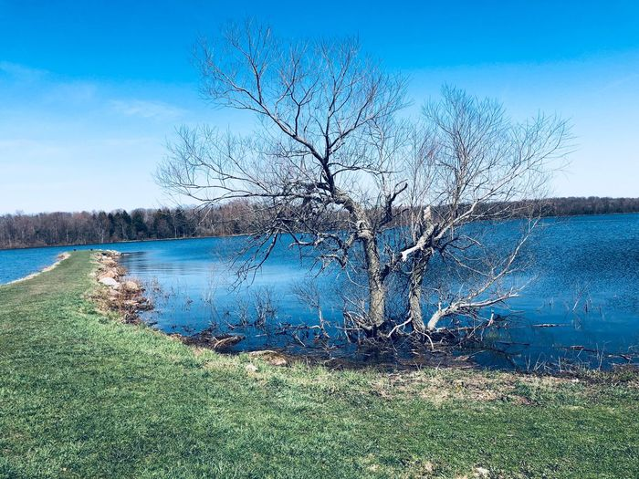 Blue waters Plant Sky Tree Water Bare Tree Tranquility Beauty In Nature