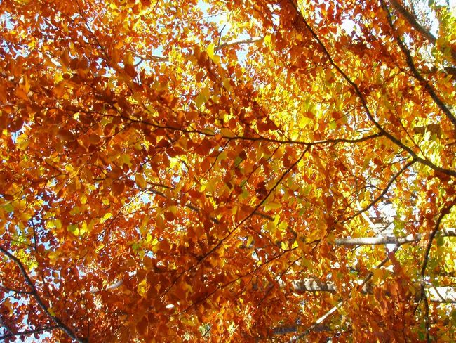 HayedoTejeranegra Hayedo Autumn Colors Autumn Leaves Abstract Pattern Trees Nature Autumn Autumn Collection Woods Leaves_collection Leaves Beautiful Nature Beauty In Nature Autumn Colours