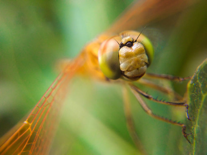 Dragonfly Insect Nature Close-up Outdoors Macro Sunlight Nature Animals In The Wild Freshness Selective Focus Mobile Photography Beauty In Nature Day One Animal