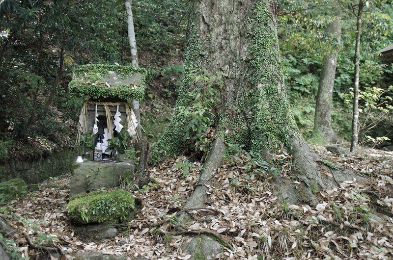 Shrine Tree Forest Green Traveling Hanging Out Oita 大分 Japan Silence Sacred Ultimate Japan Hidden Gems