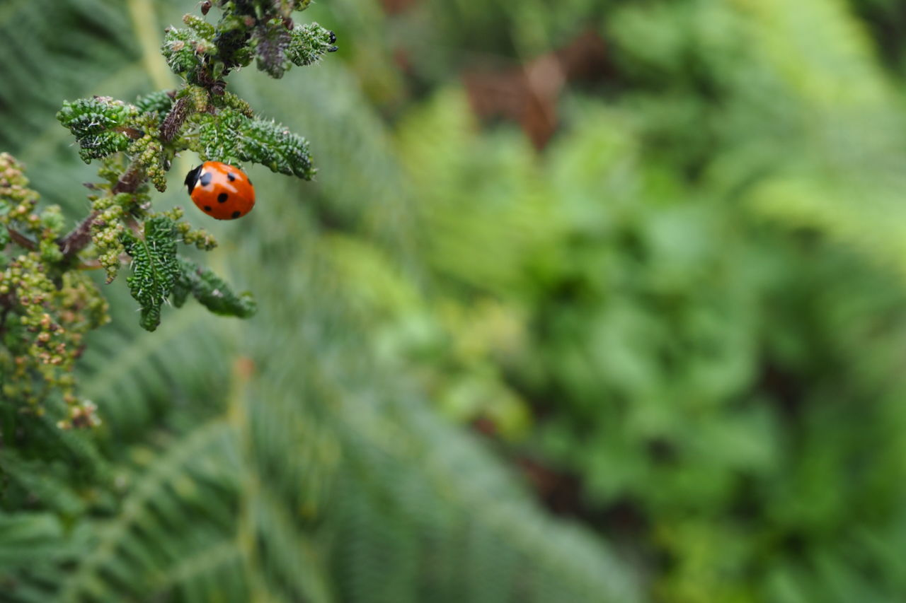 ladybug, insect, animals in the wild, one animal, outdoors, day, no people, animal themes, green color, tiny, nature, growth, focus on foreground, close-up, plant, beauty in nature, fragility, freshness