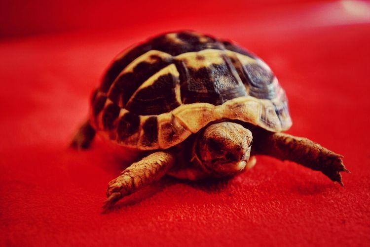 Elliot <3 Animals Hi!