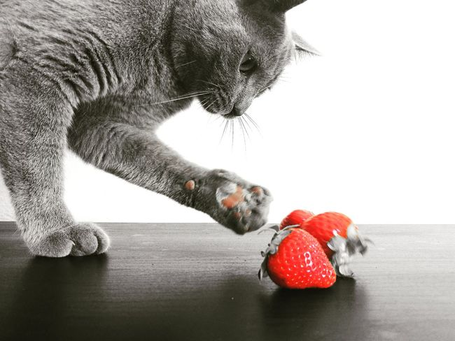 Cat Cats Fragole Strawberries Animal Grigio Grey Love