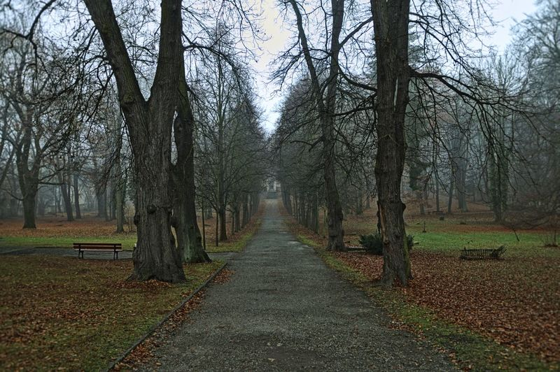 Empty Road Amidst Bare Trees On Field