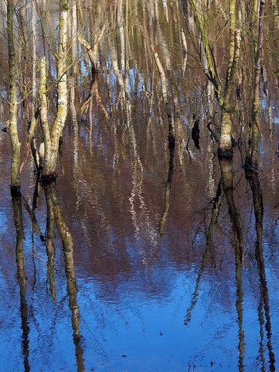 water oak trees