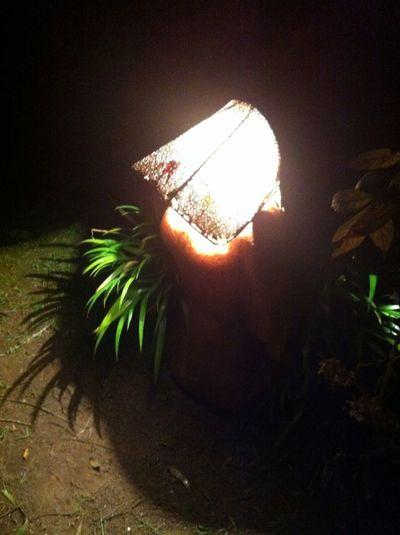 l Night Lights