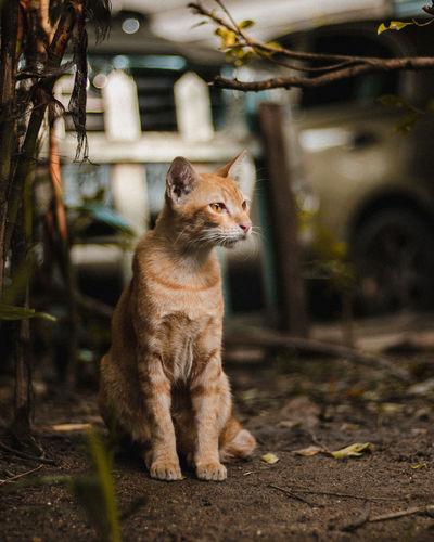 Cat sitting in a sunlight