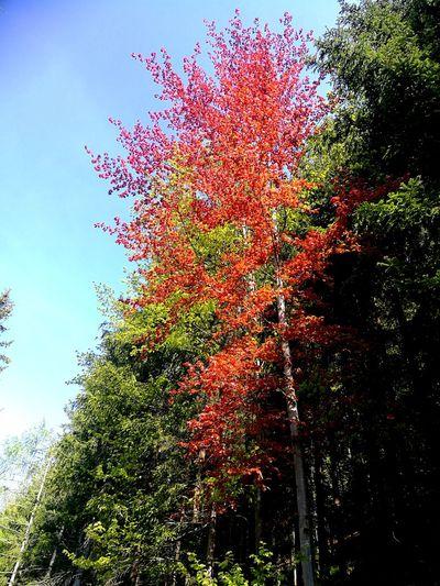 Forrest Nature