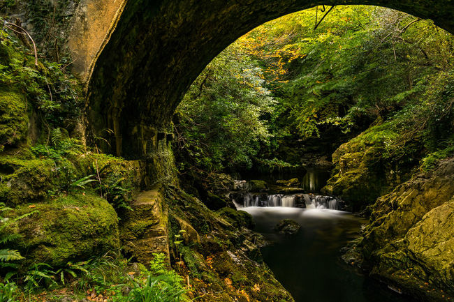 Water Nature No People Shadow Growth Green Color Tree Outdoors Sunlight Beauty In Nature Day Ireland Ireland Landscapes Northern Ireland Tollymore Forest Park