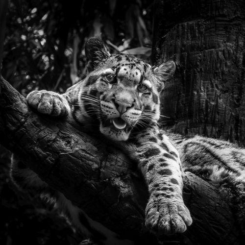 Cat Blackandwhite AMPt - Shoot Or Die