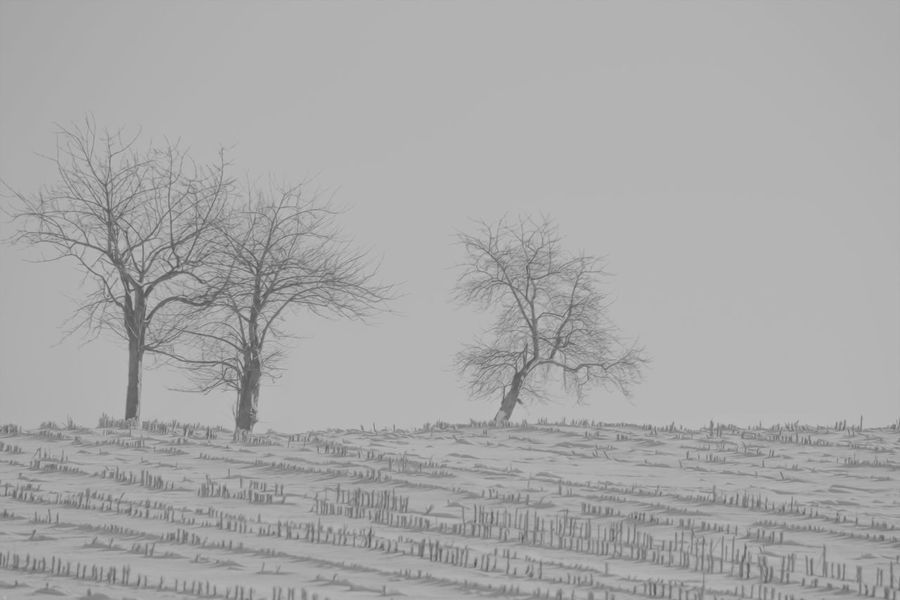 Snow over the Stubblefield Shades Of Winter Bare Tree Bare Trees Cloudy Day Cloudy Weather Cold Cold Temperature Day Landscape Nature No People Outdoors Sky Snow Stubble Field Stubblefield Tranquility Tree Tree Trees Trees And Nature Trees Collection Treescollection Winter Winter Landscape