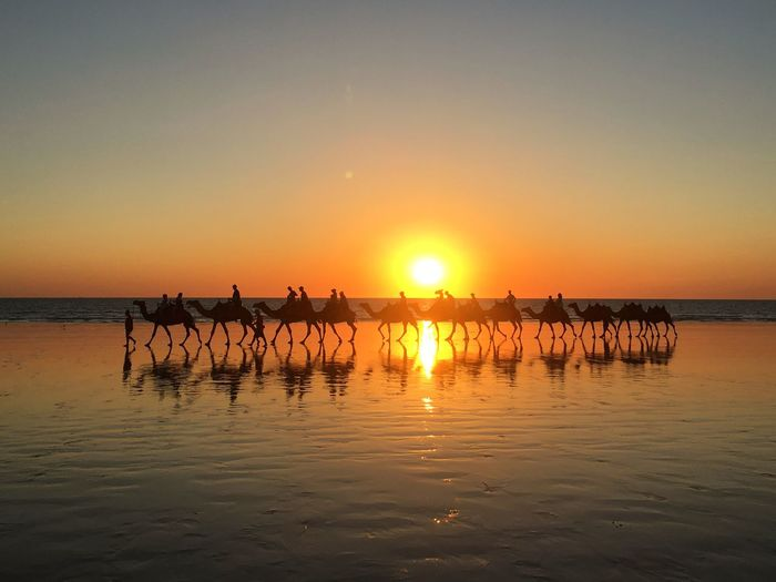 Camel Beach in Australia Beach Nature Horizon Over Water Sea Outdoors Sunlight Land Reflection Water Beauty In Nature Sky Sunset Sun Reflection