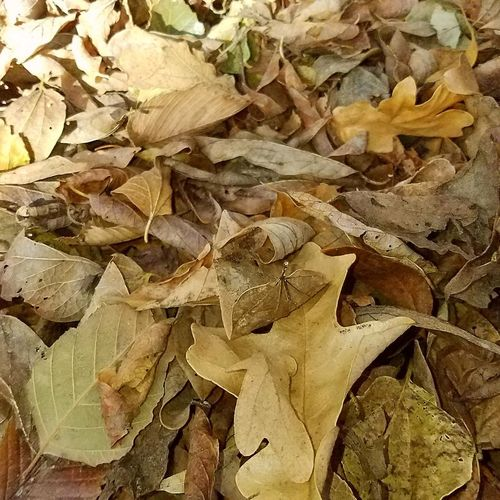 Full Frame Backgrounds Leaf No People Nature Outdoors Macro Sunny Day Flowers, Nature And Beauty Oklahoma Outdoor Hobbies Textures And Patterns Oklahoma Nature Beauty In Nature Fall Beauty Nature Fall Colors Oklahoma Garden Close Up Photography Leaves Falling Pile Of Leaves Leaf 🍂
