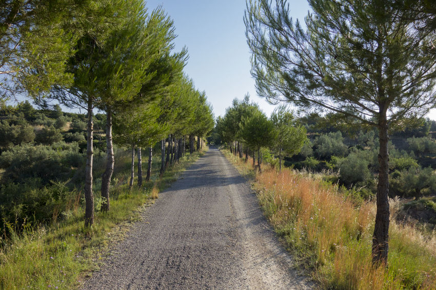Bike Castellón Cycling Day Grass Greenway Landscape Nature Nature No People Ojos Negros Outdoors Road Rural Scene Scenics Sky SPAIN The Way Forward Tree València Via Verde Way