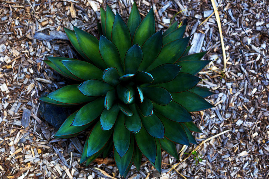 Australia Beauty In Nature Botanical Gardens Brisbane Close-up Colerfull Freshness Full Frame Green Color Growth Landscape Landscape_Collection Nature No People Outdoors Plant Queensland Succulent Plant Vibrant Color