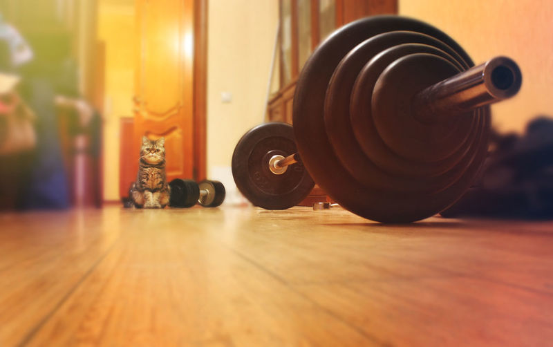 Bodybuilding Room Cat Close-up Day Dumbbell Dumbells Exercising Fit Gym Hardwood Floor Health Club Indoors  No People Sport Sports Summer