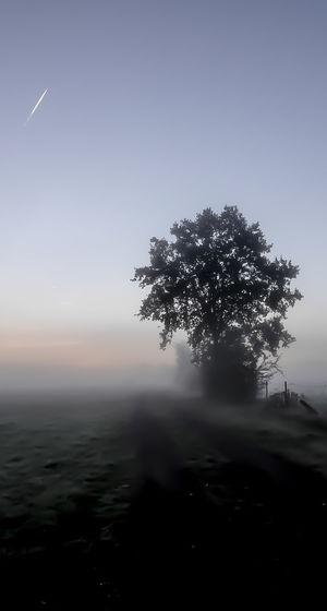 Sunny Morning Foggy Morning Silhouette Tree Sunrise Dawn Sunrise EyeEm Nature Lover Beauty In Nature Tree Fog Rural Scene Beauty Cold Temperature Sky Landscape Single Tree Tranquil Scene Countryside Treetop Tranquility Idyllic Calm Non-urban Scene