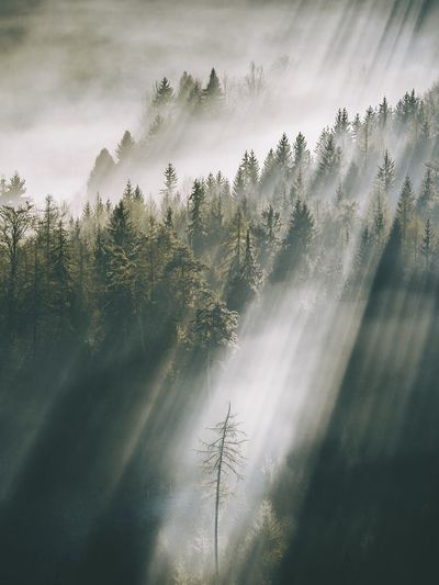 Sunlight falling in forest