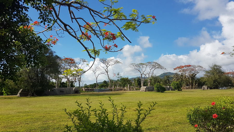 On my way to SIA Cnmi Marianas Flametree Samsungphotography Saipan Saipan Photos Saipan Northern Mariana Islands Tree Flower Sky Grass Cloud - Sky Blossom Plant Life Spring