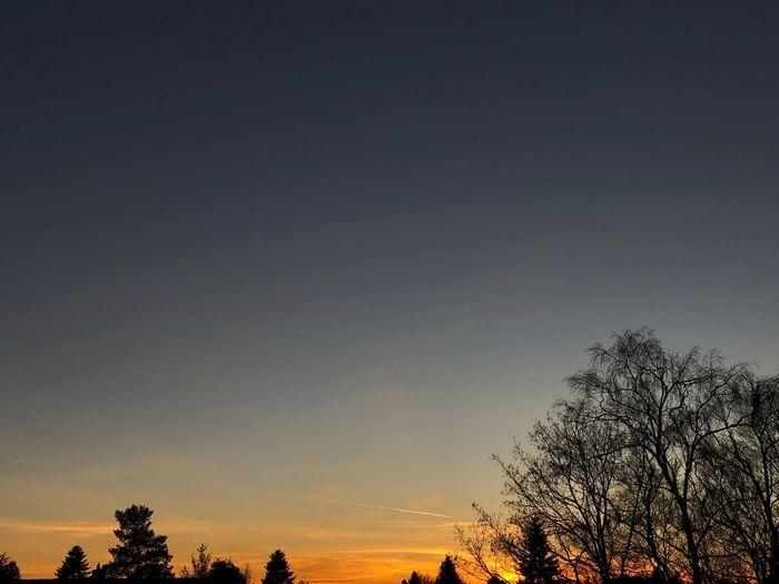 Sky Tree Sunset