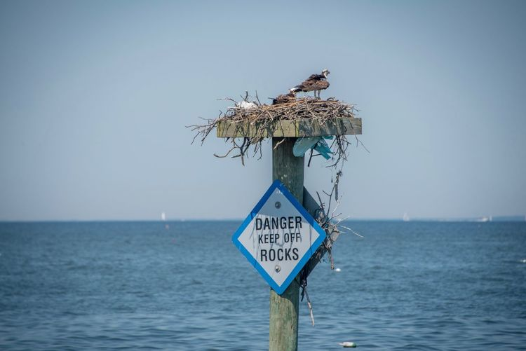 Nesting birds on the Chesapeake Bay. North Beach MD Boardwalk Nesting Nesting Birds Nest Chesapeake Bay Warning Sign EyeEm Selects Water Sea Communication Horizon Over Water Sky Sign Horizon Outdoors Information Sign Clear Sky No People Day Nature