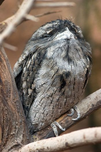Animal Animal Themes Animal Wildlife Animals In The Wild Bird Branch Close-up Day Focus On Foreground Nature No People One Animal Outdoors Perching Plant Selective Focus Tree Vertebrate Wood - Material Young Animal