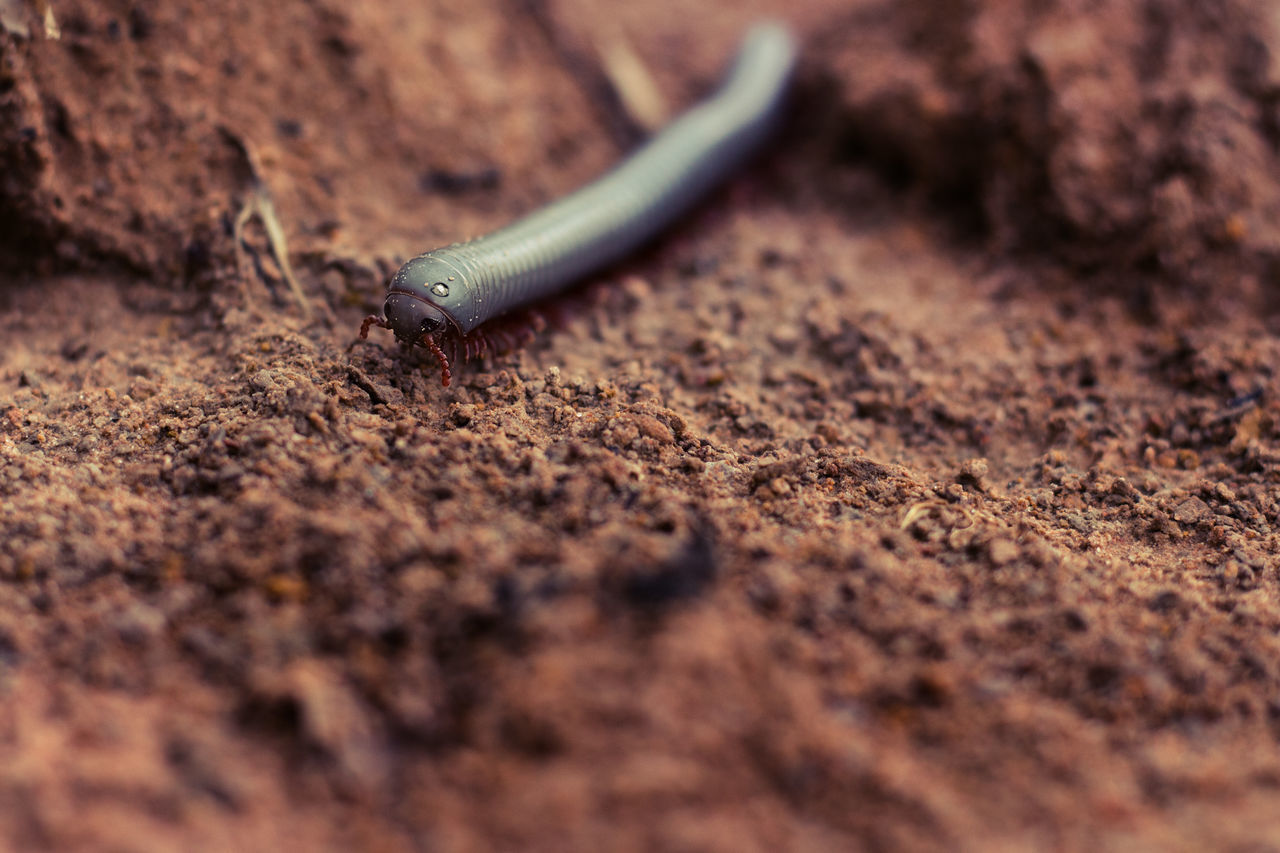 selective focus, animals in the wild, animal themes, animal wildlife, one animal, invertebrate, animal, close-up, no people, day, insect, land, gastropod, slug, nature, field, sand, outdoors, mollusk, zoology, crawling, surface level