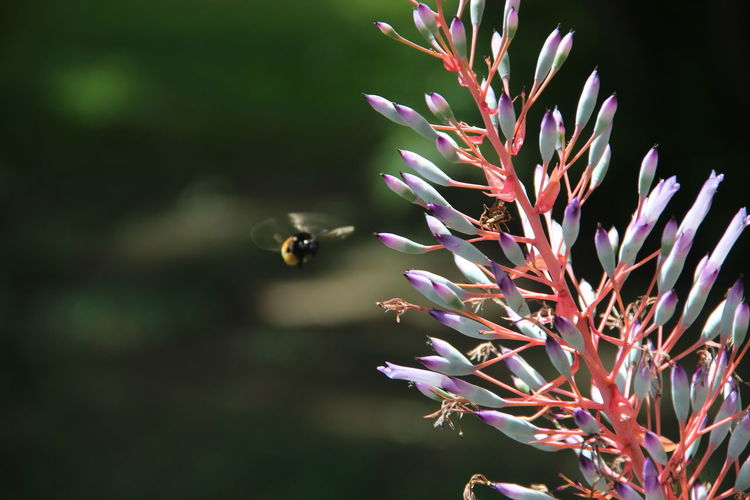 Honey bee flying by flowers on sunny day