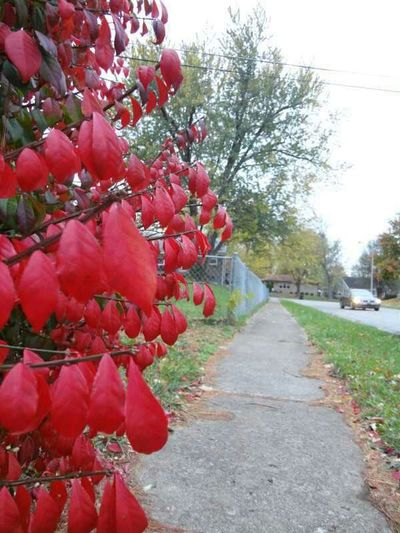 Nature Leaves Autumn Fall Autumn Leaves Red No Edit Autumn Colors Best Of Fall