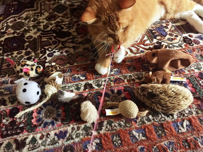 Cat Dreams Are True Focus On Foreground Cat Portrait Stuffed Toy Cuteness Cute♡ Red Ring Cats 🐱 3XPSUnity Cat Photography Pets_collection In Motion Catch The Moment Catlifestyle Cat Photo Katzenleben Cat Love Cat Playground Cat Playing With Toy Cat Playing Cat Playing On Floor